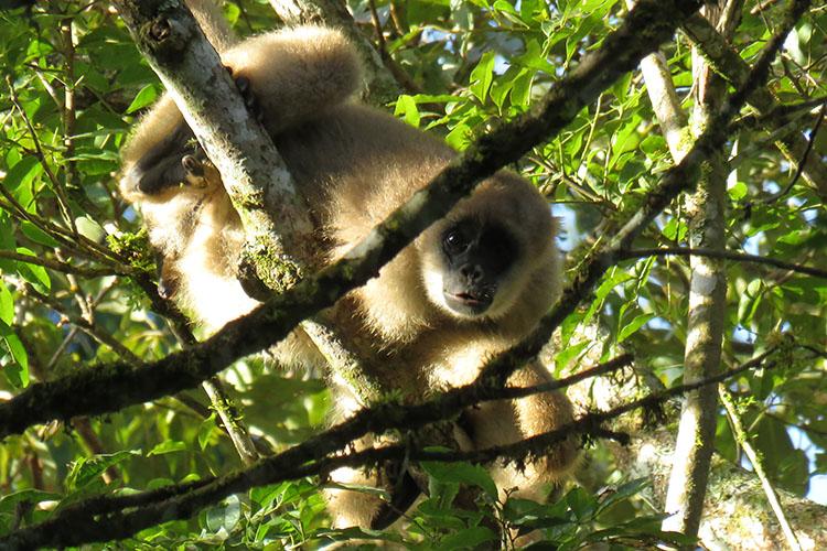 Na região do Vale do Ribeira, uma das mais carentes do município de Castro, foram encontrados 34 macacos muriqui, o maior primata das Américas, e que está ameaçado de extinção